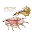 Watercolor seashells collection vector image vector image
