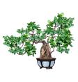 bonsai tree in a pot vector image