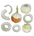 cartoon hand drawn onion set vector image