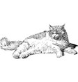 sketch a lying fat domestic cat vector image vector image
