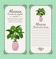 vintage label with alocasia plant vector image