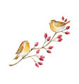 watercolor branch with red berries and birds vector image vector image