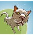 cartoon cat looking sad in focus vector image vector image