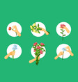 hands hold flowers set red plucked chrysanthemums vector image vector image