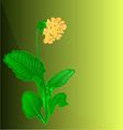 Primrose spring flower green background vector image