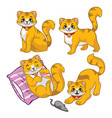 cute cat set vector image vector image