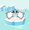 penguin couple in north pole arctic vector image vector image