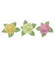 yellow green pink flower hydrangea mophead vector image