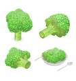 broccoli cabbage icon set isometric style vector image vector image