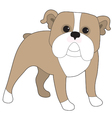 English Bulldog vector image vector image