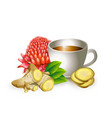 graphic image of healthy tea cup vector image vector image