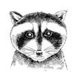 hand drawn portrait funny raccoon baby vector image vector image