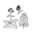 linear set of burdock line drawing vector image vector image