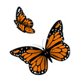 Monarch Butterfly vector image vector image