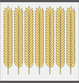 set wheat ears sketch cereal for bakery and vector image vector image