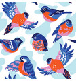 bullfinches pattern vector image