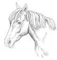horse portrait-18 vector image vector image