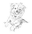 sketch of dog vector image