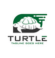 turtle logo design template vector image