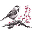 a sparrow sits on a cherry branch blossom vector image vector image