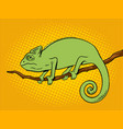 chameleon animal color pop art vector image