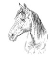 horse portrait-20 vector image vector image