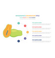 papaya infographic template concept with five vector image vector image