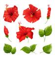 realistic flowers hibiscus set vector image vector image