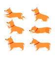 set of poses and emotions dog welsh corgi set vector image vector image