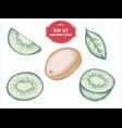 collection of hand drawn pastel kiwi vector image vector image
