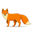 red fox animal standing on a white background vector image vector image