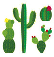 cactus colored vector image