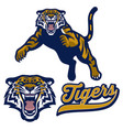 mascot tiger pounching in set vector image vector image