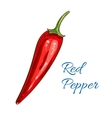 Red pepper vegetable isolated sketch icon vector image