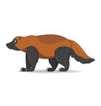 wolverine animal standing on a white background vector image vector image