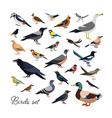 bundle city and wild forest birds drawn in vector image