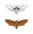 with hand drawn dead head moth vector image vector image