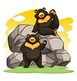 Two playful bears vector image vector image