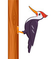 woodpecker bird on a white background vector image vector image