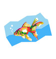colorful goldfish vector image vector image