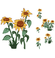 flowers sunflowers vector image vector image