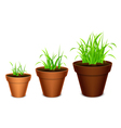 Growing grass vector image