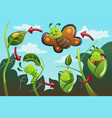 life cycle of the butterfly vector image vector image