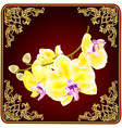 orchid phalaenopsis stem with golden flowers vector image vector image