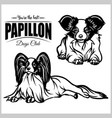papillon - set isolated on vector image vector image