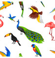 seamless pattern with tropical exotic birds vector image vector image