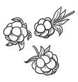 set sketch cloudberry vector image vector image