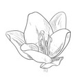 sketch of flower vector image vector image