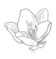 sketch of flower vector image vector image
