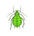 aphid insect parasite bug pest control greenfly vector image vector image